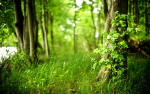 263701__nature-beautiful-wallpapers-forest-fresh-air-cleanliness-trees-plants-foliage-fresh-grass_p
